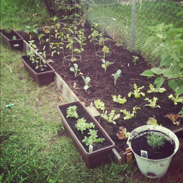 Vegetable Garden in the Works…