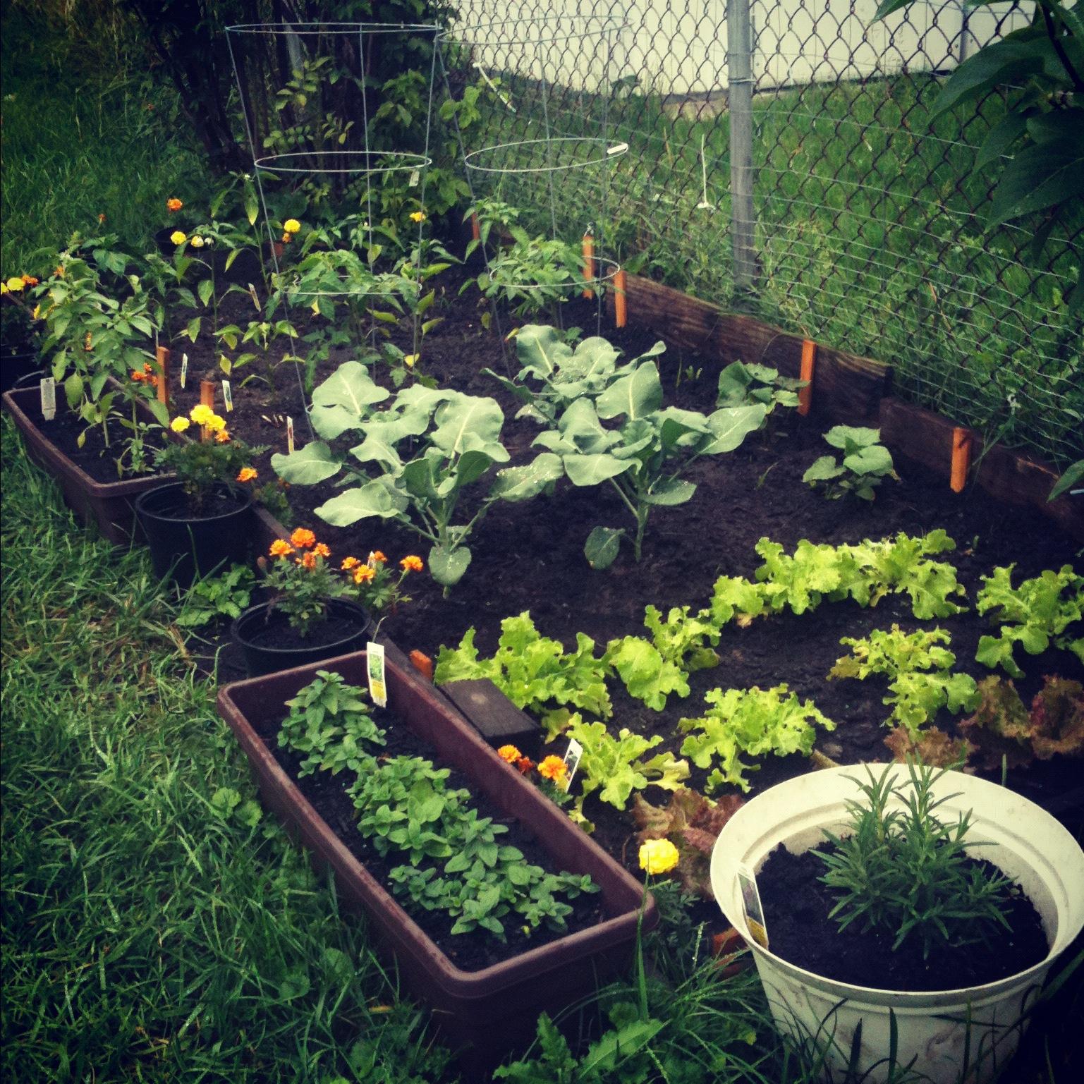 Gardening Tips Part III
